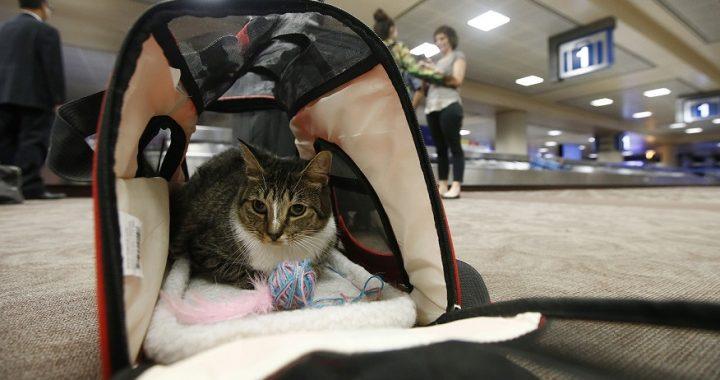 給貓辦張英國移民簽有多麼難